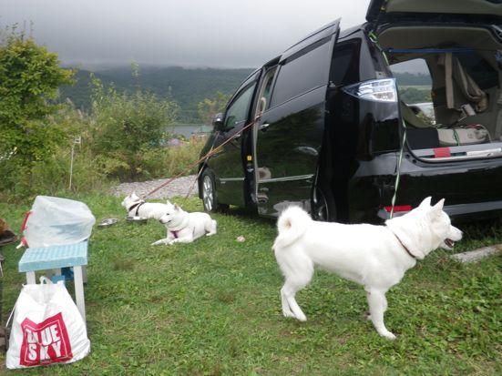 2013.9.7 キャンプ2日目セコムするワンズ