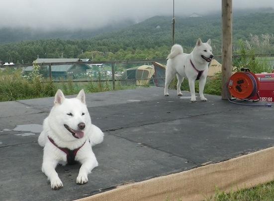 2013.9.7 キャンプ2日目ドッグラン6