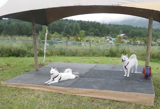 2013.9.7 キャンプ2日目ドッグラン5