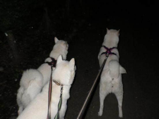2013.9.24 芦花公園で三頭引き5