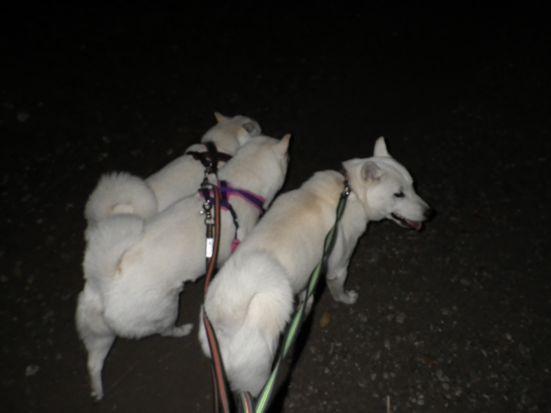 2013.9.24 芦花公園で三頭引き2