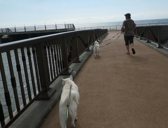 2013.10.2 豊浦海浜公園6