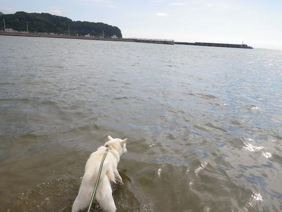 2013.10.2 豊浦海浜公園2