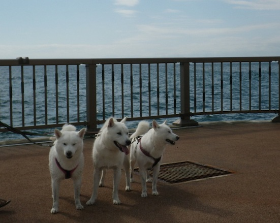 2013.10.2 豊浦海浜公園7