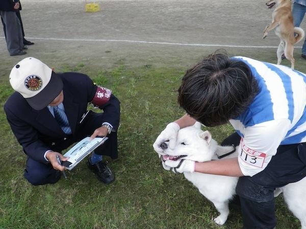 2013.10.6 恵庭支部展・獣猟クラス優勝歯牙検査2