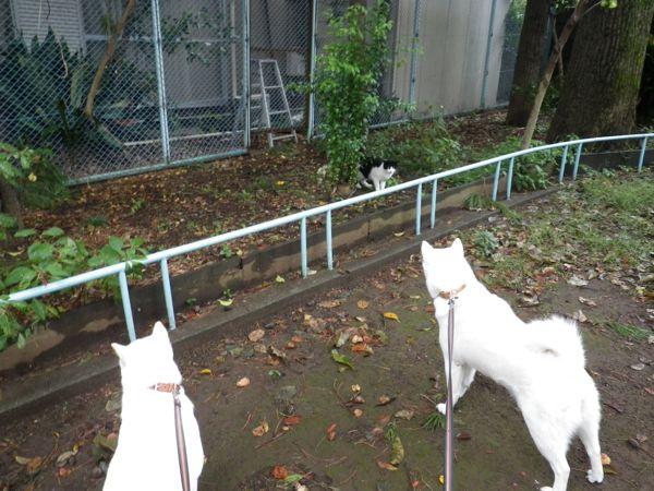 2013.10.25 花&花鈴VS猫