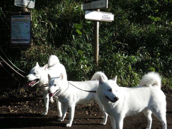 2013.10.26 こんぶくろ池自然博物公園6