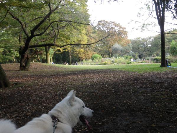 2013.10.30 代々木公園1