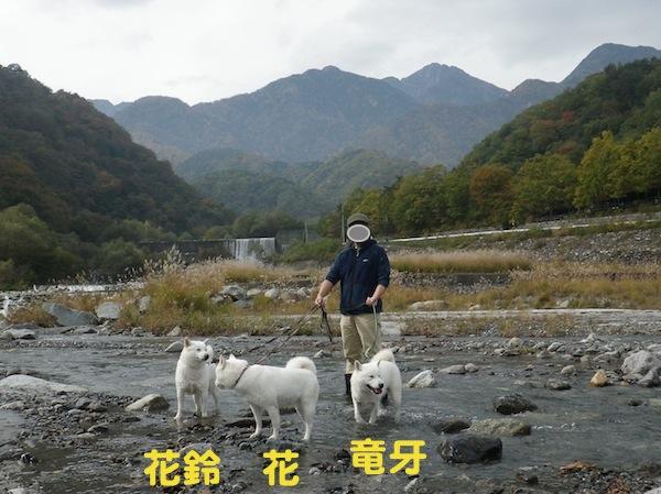 2013.11.3 大武川7