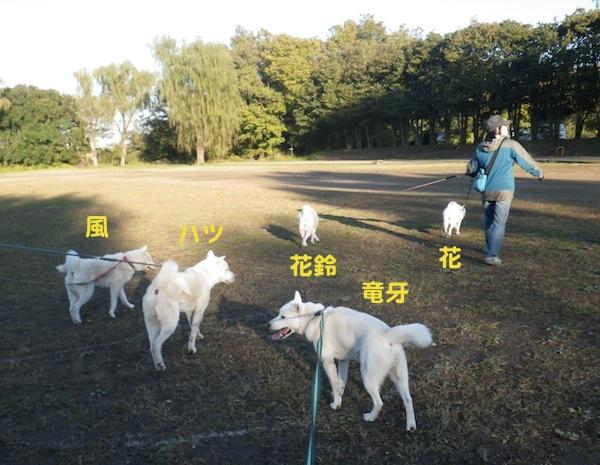 2013.11.21 秋ヶ瀬公園2