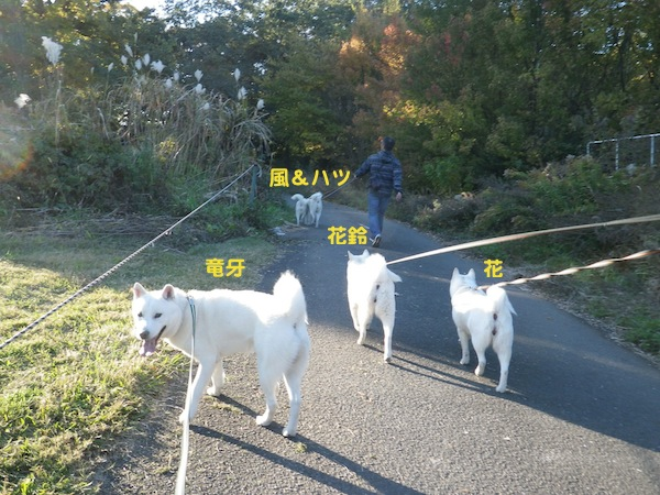 2013.11.21 秋ヶ瀬公園1