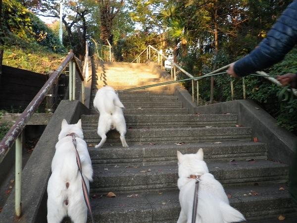 2013.11.23 西郷山公園4