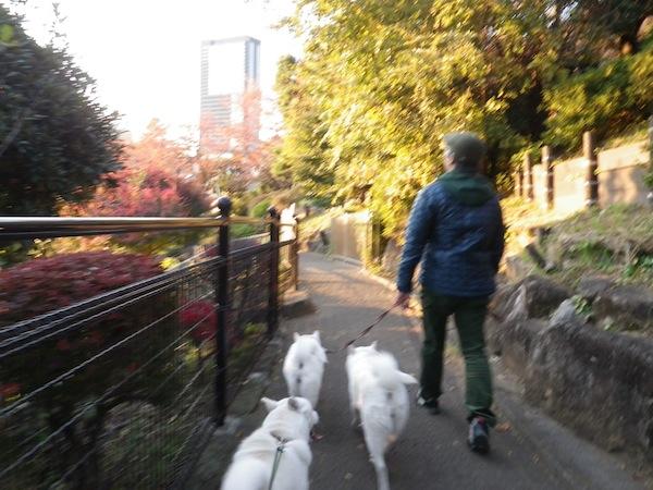 2013.11.23 西郷山公園2