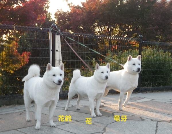 2013.11.23 西郷山公園1