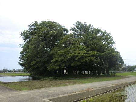 熊野神社・厚木市猿ケ島