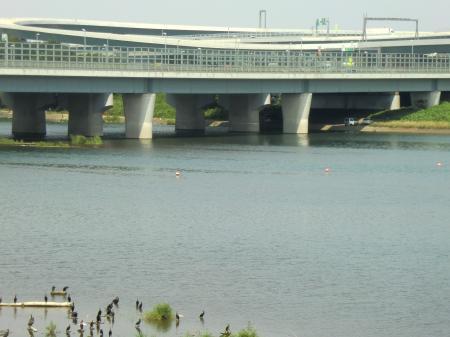 相模大堰管理橋より上流を望む