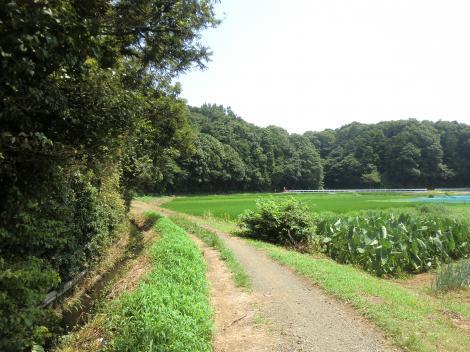 石川堰用水路・石川ポンプ場付近