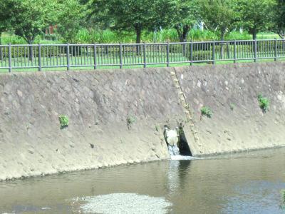 引地川親水公園左岸フラップゲート