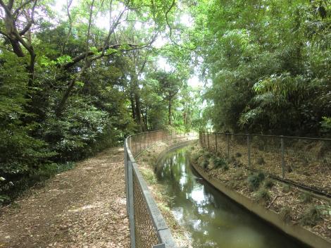 相模川左岸幹線用水路・寒川町湘風園付近
