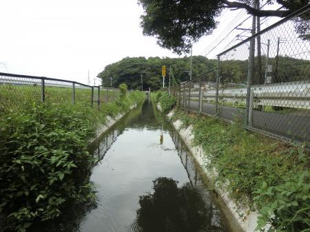 相模川左岸幹線用水路・茅ヶ崎市行谷