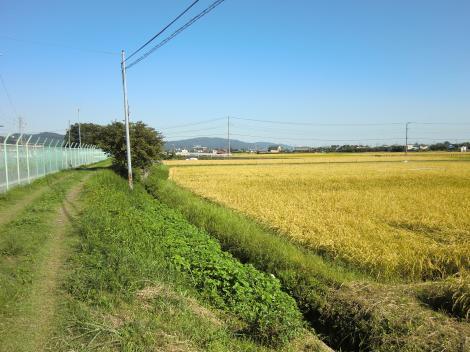 文命用水と田んぼの風景・遠藤島橋付近