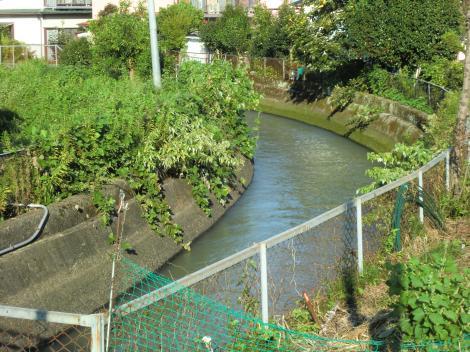 酒匂川へ向かう酒匂左岸用水・開成町金井島