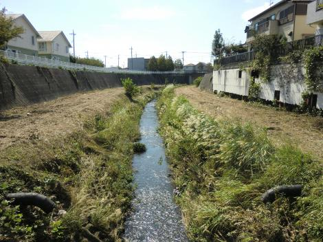 水道橋より鳩川下流を望む