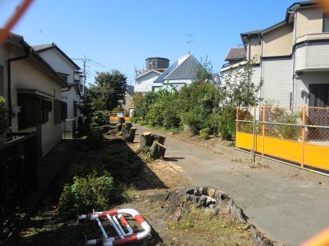 さがみの仲よし小道桜伐採工事区間