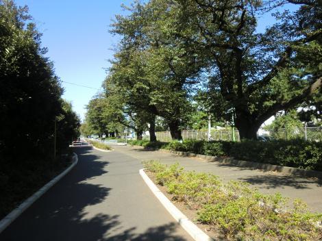 西幹線用水路・東原桜並木