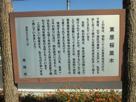 東原桜並木案内看板