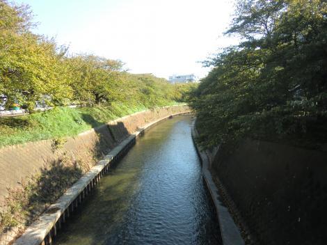 柳橋より引地川下流を望む