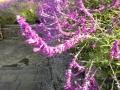 津久井湖畔花の苑地にて