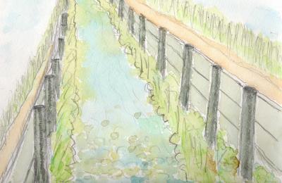 山崎川支流