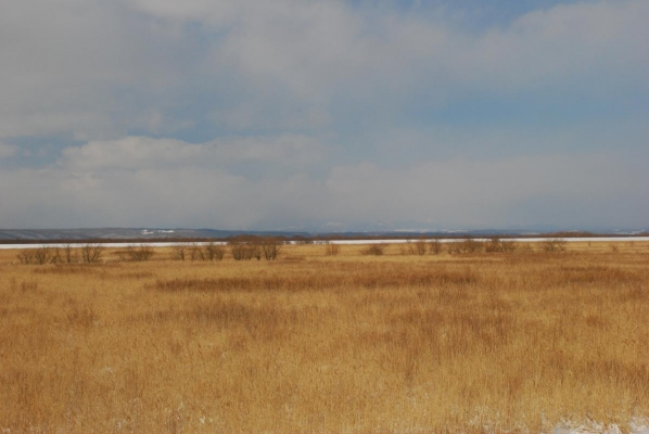 新釧路川  堤防沿いに散歩