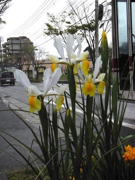 道路脇の花壇も綺麗です