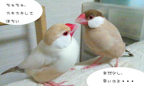 2羽1人絶不調_4