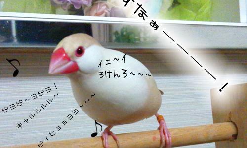 小鳥の歌_2