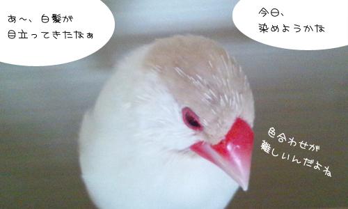 白髪・・・か?_1