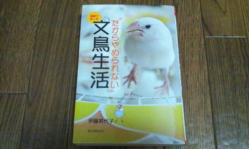 文鳥生活_1