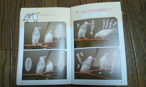 文鳥生活_3