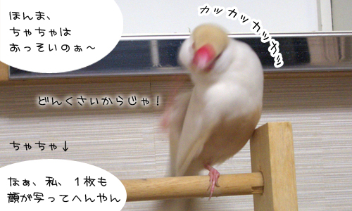 いらち_4