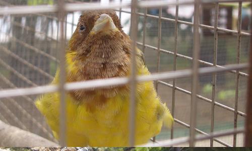 神戸花鳥園の危機_1