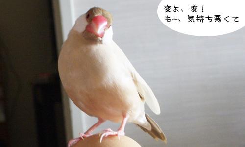 羽の重なり順_1