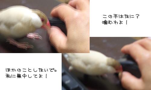お嬢様のお怒り_1