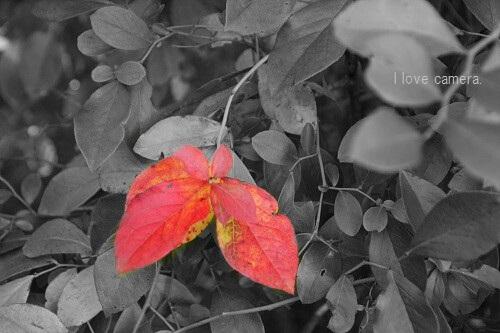 Photo Art(1)赤い葉っぱ