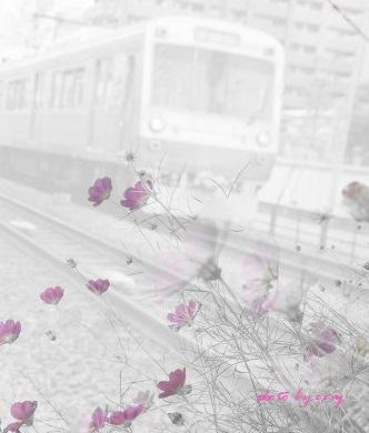 kako-7kiGubAsYZHb8Wzg電車とコスモス2