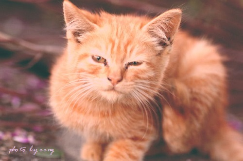 kako-RwrwyoyRB9ihXB6O子猫