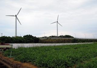 三浦半島のスイカ畑1