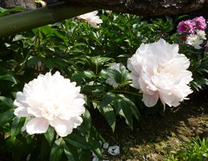 2013522本行寺blog02