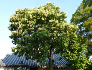 栗の花blog01